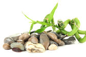 Still life with green bamboo plant and stones, isolated on white — Stockfoto