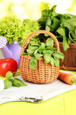 Fresh herb in basket on wooden table on natural background — Stock Photo