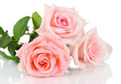 Beautiful bouquet of roses isolated on white — Stock Photo