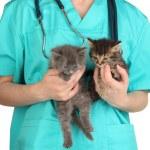 Veterinarian examining kittens isolated on white — Stock Photo