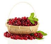 Ripe red cranberries in basket, isolated on whit — Stock Photo