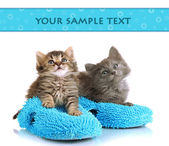 Small kittens sits on house slippers isolated on white — Stock Photo