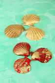 Colorful seashells on color background — Stock Photo