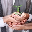 Business team holding together fresh green sprout closeup — Stock Photo #27373645