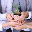Business team holding together fresh green sprout closeup — Stock Photo