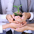 Stock Photo: Business team holding together fresh green sprout closeup
