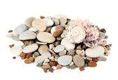 Pierres de mer isolés sur blanc — Photo