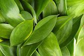 Krásné zelené listy, zblízka — Stock fotografie