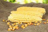Fresh corn on sackcloth, on bright background — Stock Photo