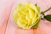 Nádherná růže na tabulka detail — Stock fotografie