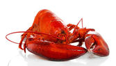 Red lobster isolated on white — Stock Photo