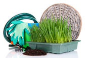 Seed box with seedling isolated on white — Stockfoto
