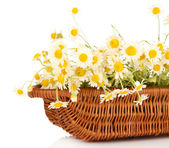 Small chamomiles in wicker basket isolated on white — Stock Photo