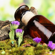 Bottle with basics oil on tree bark and stones close up — Stock Photo #27722791