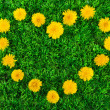 Heart of dandelions on grass close-up — Stock Photo