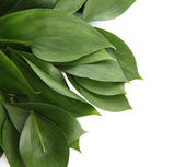 Beautiful green leaves, isolated on white — Stock Photo