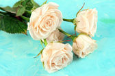 Beautiful creamy roses close-up, on color background — Stock Photo