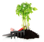 Young plant in ground isolated on white — Stock Photo