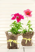 Petunias in pots on wooden background — Stock Photo