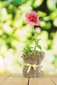 Petunia in pot on wooden table on nature background — Stock Photo