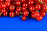 Redcurrants on blue background — Stock Photo