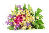 Bouquet of wild flowers, isolated on white — Stock Photo