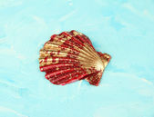 Kleurrijke zeeschelp op een houten achtergrond kleur — Stockfoto