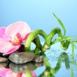 Still life with green bamboo plant, orchid and stones, on blue background — Stock Photo