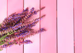 Salvia flowers on pink wooden background — Stock Photo