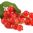 Branch of red currant isolated on white — Stock Photo #27843753