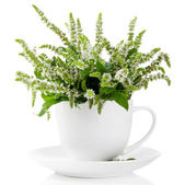 Fresh mint flowers in cup isolated on white — Stock Photo