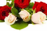Beautiful roses, isolated on white — Stock Photo