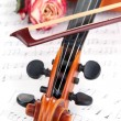 Classical violin  with dry rose on notes — Stockfoto