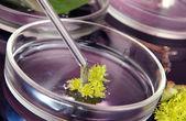 Badania chemiczne w petriego na ciemnym tle fioletowy — Zdjęcie stockowe