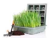 Seed box with seedling isolated on white — Stock Photo