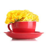 Roses in red cup isolated on white — Stock Photo