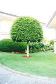 Paesaggistica in giardino — Foto Stock