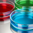 Color liquid in petri dishes on grey background — Stock Photo #28086827
