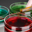 Color liquid in petri dishes on grey background — Foto Stock