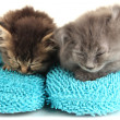 Small kittens sits on house slippers isolated on white — Stok fotoğraf