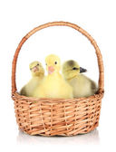 Little ducklings in wicker basket isolated on white — Stock Photo