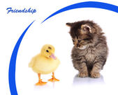 Small kitten and duckling isolated on white — Fotografia Stock