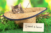 Small kitten in hat on grass on natural background — Stock Photo