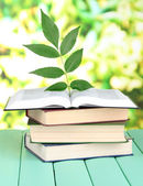 Books with plant on table on bright background — Stock Photo