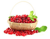 Ripe red cranberries in basket, isolated on whit — Stockfoto