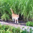 Cat walking in garden — Stock Photo
