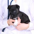 Veterinary doctor holding puppy isolated on white — Stock Photo