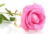 Beautiful pink rose, close up — Stock Photo