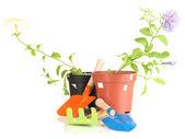 Piantine e strumenti giardiniere isolato su bianco — Foto Stock