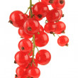 Stock Photo: Branch of red currant isolated on white